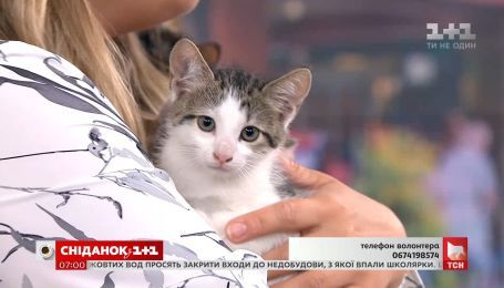 Трое котят ищут уютный дом