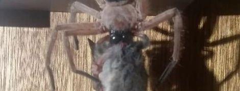Флешмоб #SixWordHorror із жахами та унікальне фото павука, який вполював опосума. Тренди Мережі