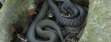 """""""Это еда романтическая"""": владельцы первой змеиной фермы надеются изменить вкусы украинцев"""