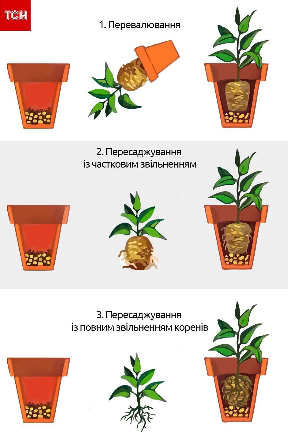 Види пересаджування квітів, для блогів