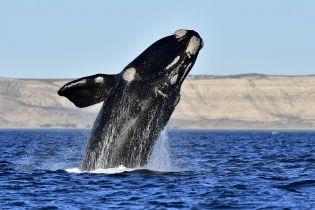 Биологам впервые удалось записать песню редчайших в мире китов: как она звучит и почему на самом деле печальна