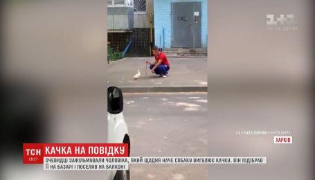 Харків'яни помітили чоловіка, який на повідку вигулював качку