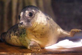 """Тюленей научили петь мелодию из культовых """"Звездных войн"""": как это звучит"""