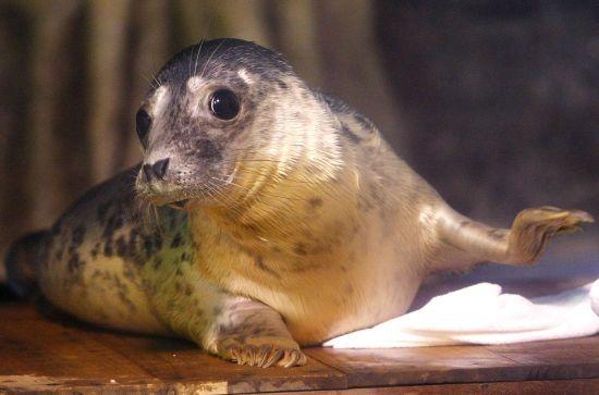 """Тюленів навчили співати мелодію з культових """"Зоряних війн"""": як це звучить"""