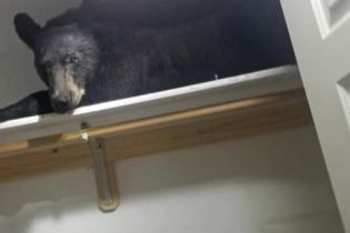 В США медведь залез в дом и уснул в шкафу