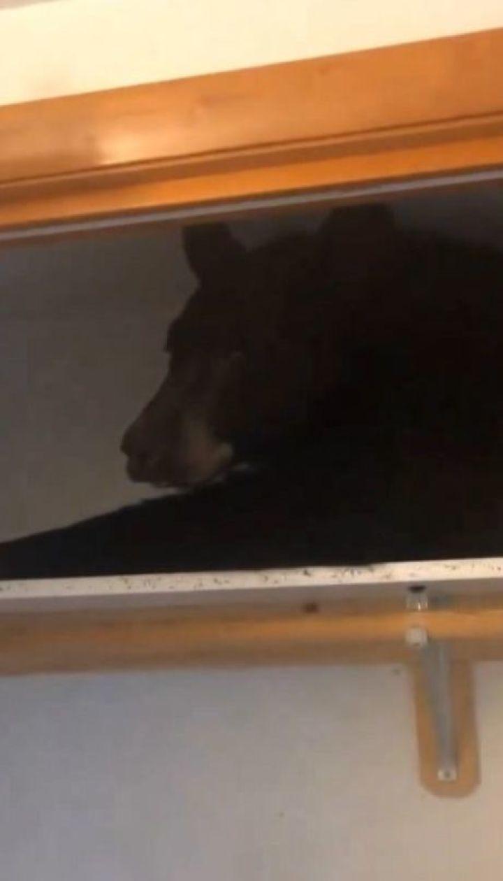 Чорний ведмідь пробрався до чужого будинку і заснув у шафі