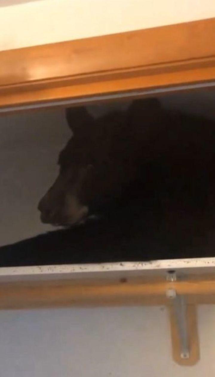 Черный медведь пробрался в чужой дом и уснул в шкафу