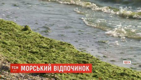Купаться можно: Черное море почти полностью очистились от водорослей