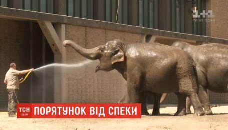 Європейські зоопарки рятують тварин від спеки водою та крижаними смаколиками