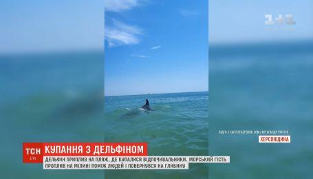 На Херсонщині на пляж, де купалися люди, приплив дельфін