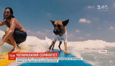 Израильский пес-серфингист стал настоящей сенсацией местных пляжей