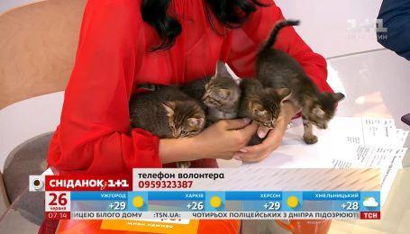 Четверо грайливих кошенят шукають дім