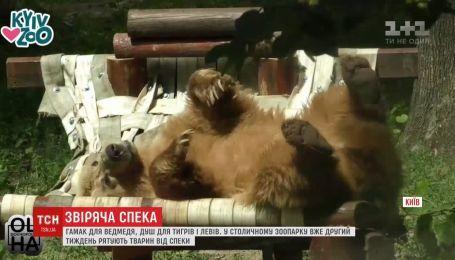 Обещанного падения температуры ожидают в столичном зоопарке