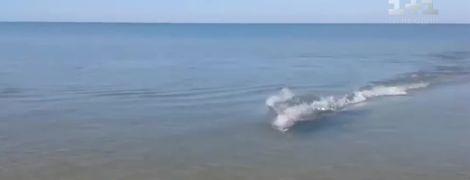 На Херсонщине дельфин приблизился к берегу и просто проплыл между отдыхающих