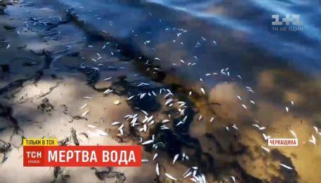 У річці Дніпро масово гине риба на Черкащині