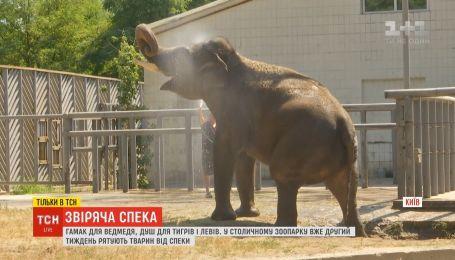 ТСН дізналась, як мешканці столичного зоопарку переживають спеку