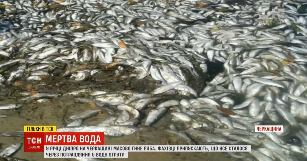 Днепр отравили: в главной реке Украины массовый мор рыбы и раков