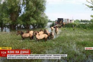 Украинские экологи поселили табун диких лошадей на необитаемом острове