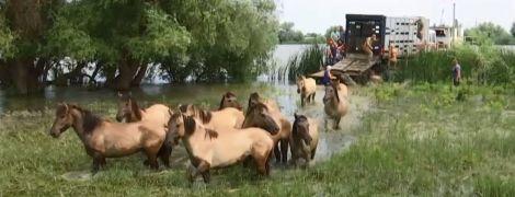 Українські екологи оселили табун диких коней на безлюдному острові