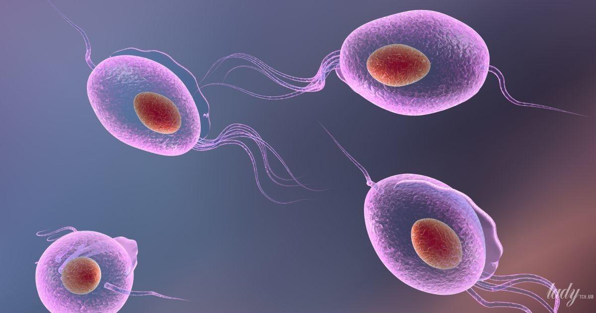Беременность и трихомониаз: влияние инфекции на маму и новорожденного