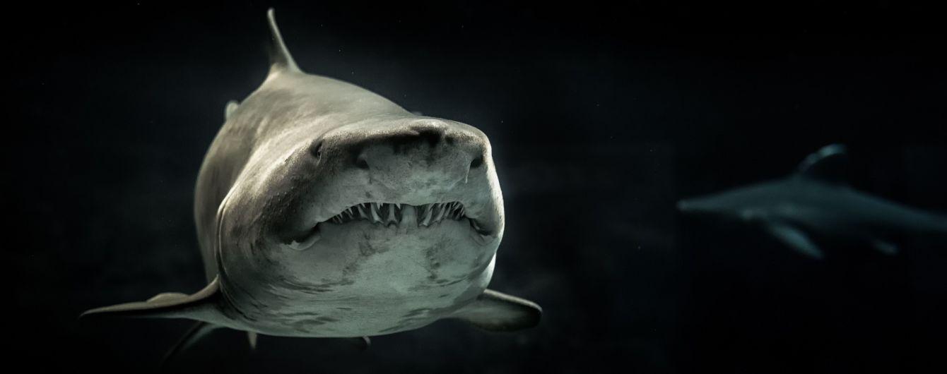 В Канаде сняли нападение акулы-людоеда на тюленя на глазах у туристов