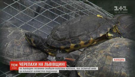 Бананы, обезьяны и необычные черепахи - перспективы Львовской области вследствие потепления