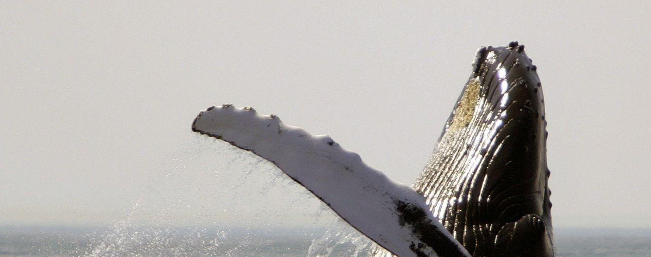 Япония официально начала охоту на китов - первые китобойные корабли уже вышли из портов