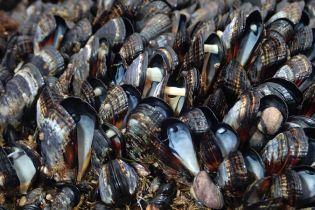В Калифорнии сотни мидий сварились на побережье из-за сильной жары