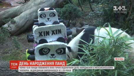 Танець драконів та величезний торт: у мексиканському зоопарку відзначили день народження панд
