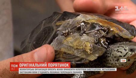 Волонтерская организация в США просит приносить ненужное белье для спасения черепах