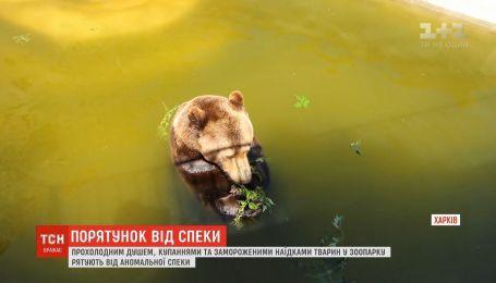 Водные процедуры и замороженные лакомства: жителей харьковского зоопарка спасают от жары