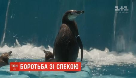 Справиться с невероятной жарой помогают в Сербии людям и животным