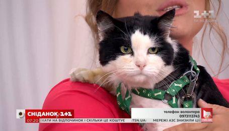 Котик Макар ищет новый дом