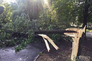 Непогода в Кривом Роге: 50 тысяч горожан остались без света, 170 деревьев вырваны и погиб мужчина