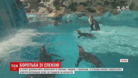 Охлаждающий бассейн от жары построили для пингвинов в Сербии