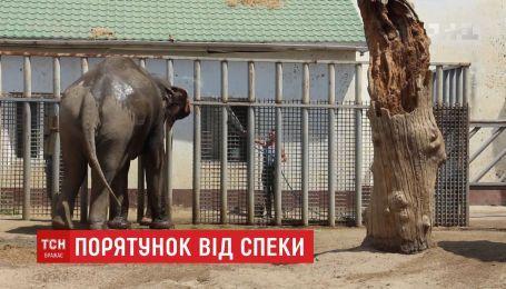 Как в зоопарке Харькова спасают любимцев от жары