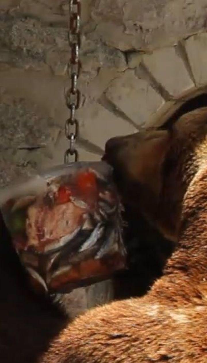 В харьковском зоопарке животных от жары спасают прохладным душем и замороженными блюдами