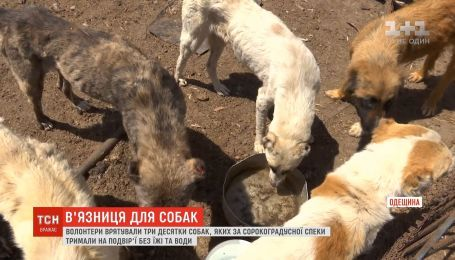 В Одесской области волонтеры спасли три десятка собак, которых держали в жару во дворе без еды и воды