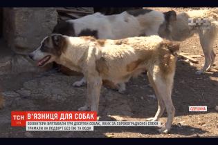 Собачье гетто. На Одесщине зоозащитники напали на тюрьму для среднеазиатских овчарок