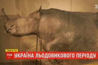 Украина ледникового периода: где сейчас хранятся сенсационные находки из Прикарпатья