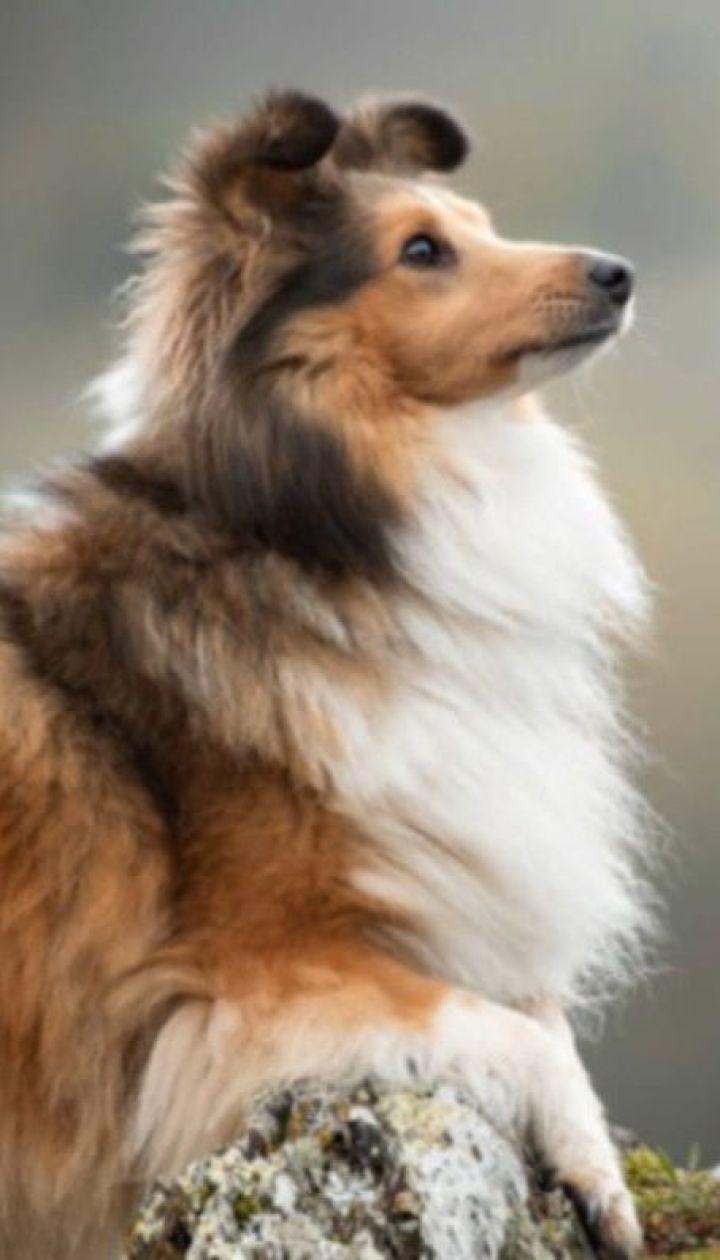 Собаки способны снижать уровень стресса у студентов - ученые Вашингтонского университета