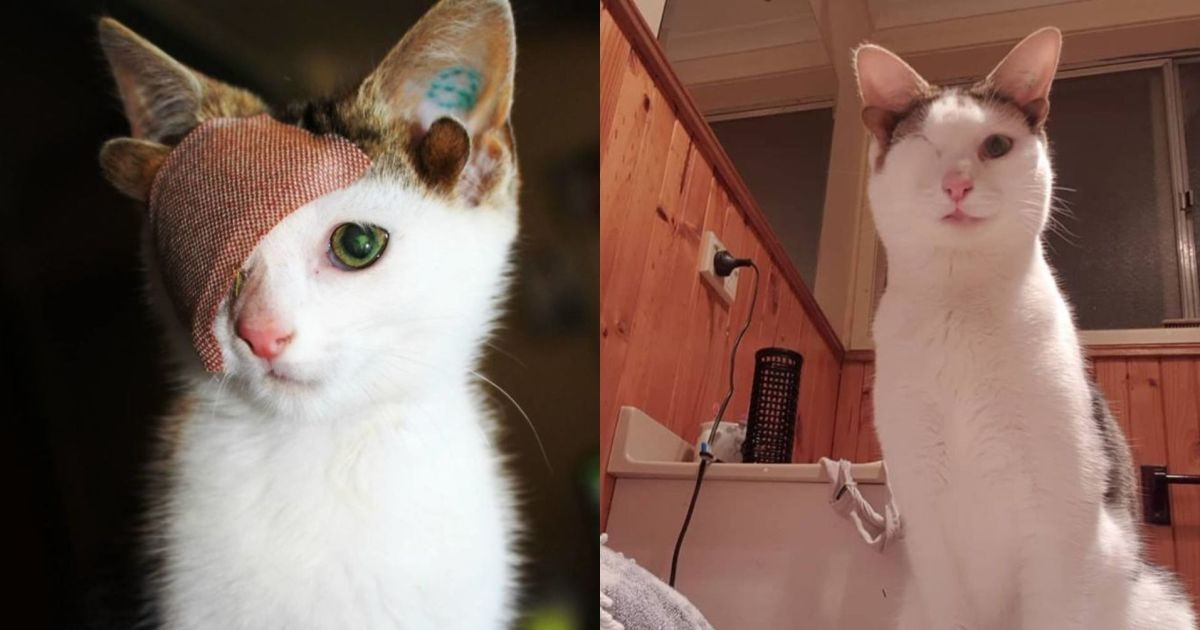 Четыре уха и один глаз: Сеть умилил необычный котенок