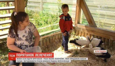 Женщина из села Ядуты спасла аистов, которых придавило собственное гнездо