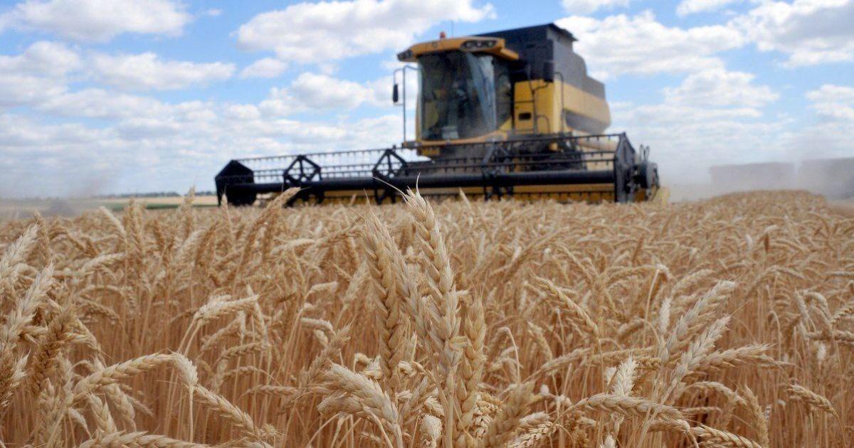 Україна стала одним з лідерів експорту пшениці: куди везуть зерно