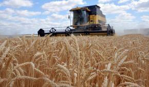 Украина стала одним из лидеров экспорта пшеницы: куда везут зерно