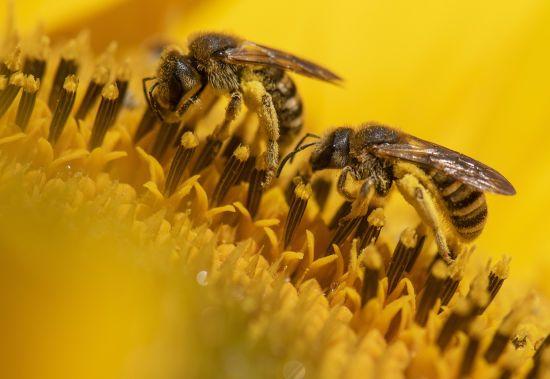 У Тернопільській області помер чоловік після того, як його покусав рій бджіл