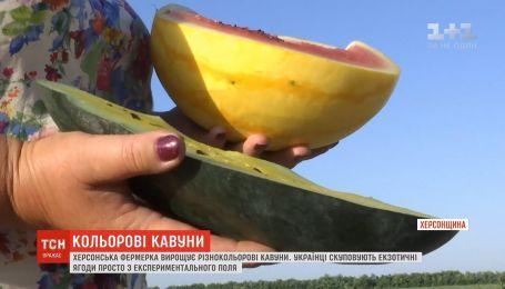 На Херсонщине фермер выращивает разноцветные арбузы