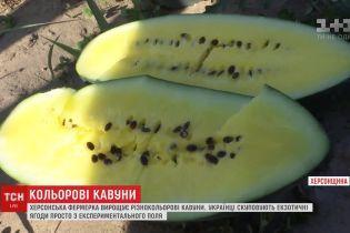 На Херсонщине выращивают желтые, оранжевые и пятнистые арбузы