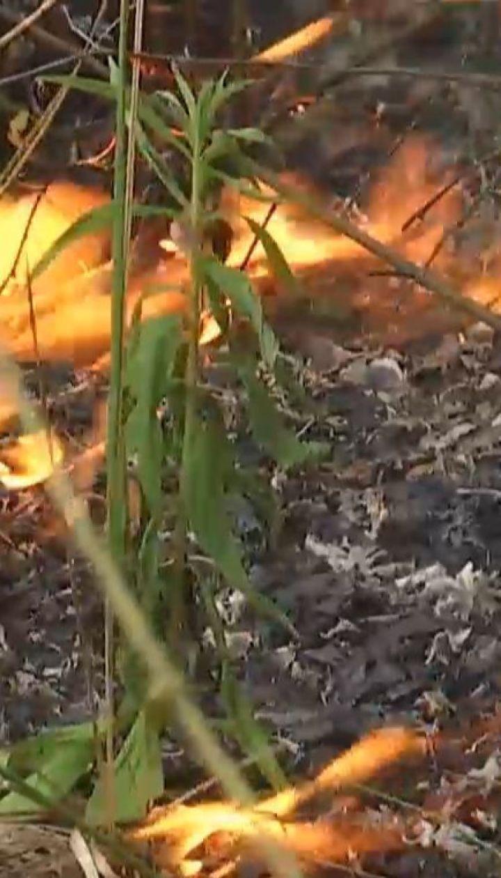 Поблизу Луцька вогонь охопив понад гектар сухостою та дерев