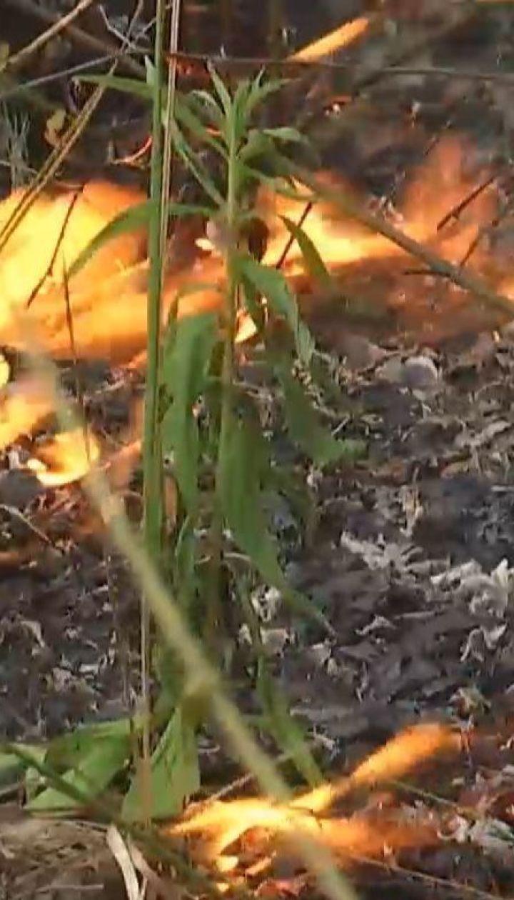 Вблизи Луцка огонь охватил более гектара сухостоя и деревьев
